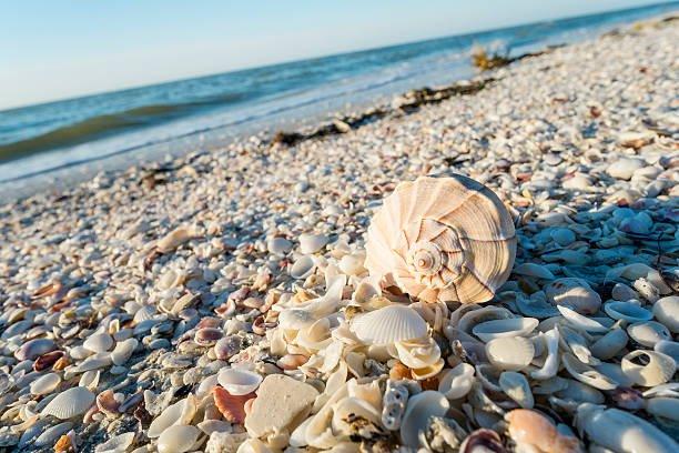 seashells-on-the-beach-of-sanibel-island-in-florida