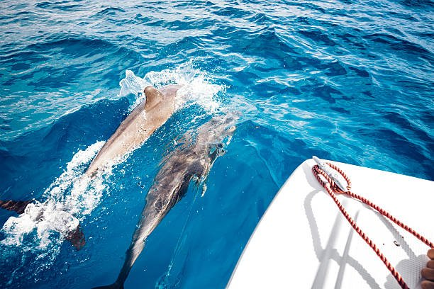traveling-with-dolphins